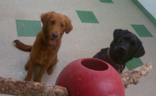 Our indoor play room is a great place for you dog to spend the day!